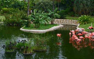 jungle_island_in_m_galleryfull